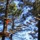 Aventura en los árboles arborismo