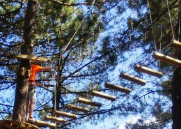 Arborismo en Sierra de la Culebra