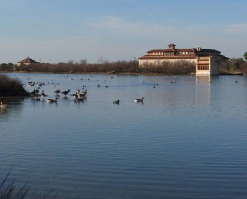 Aves en las Lagunas de Villafafila
