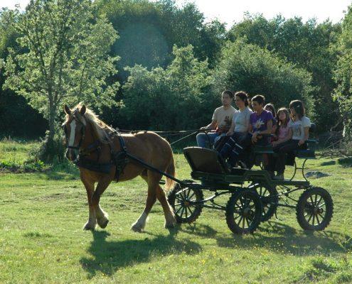 calesa ruta en caballo