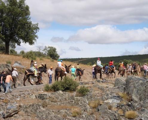 En burro por el Camino de Santiago