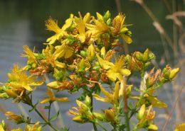 taller plantas medicinales zamora