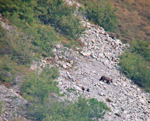 ver osos en leon
