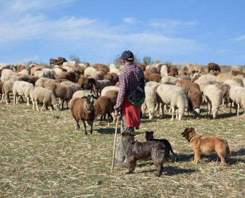 Ser pastor por un día