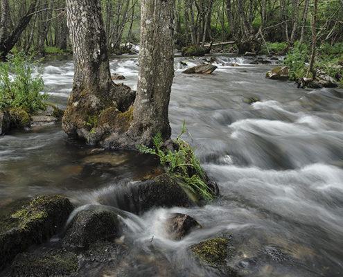 Rio Baceiro. Terroso, P.N. Montesinho, Bragança, Portugal.