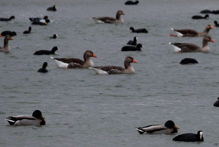 Birdwatching ver aves lagunas Villafáfila