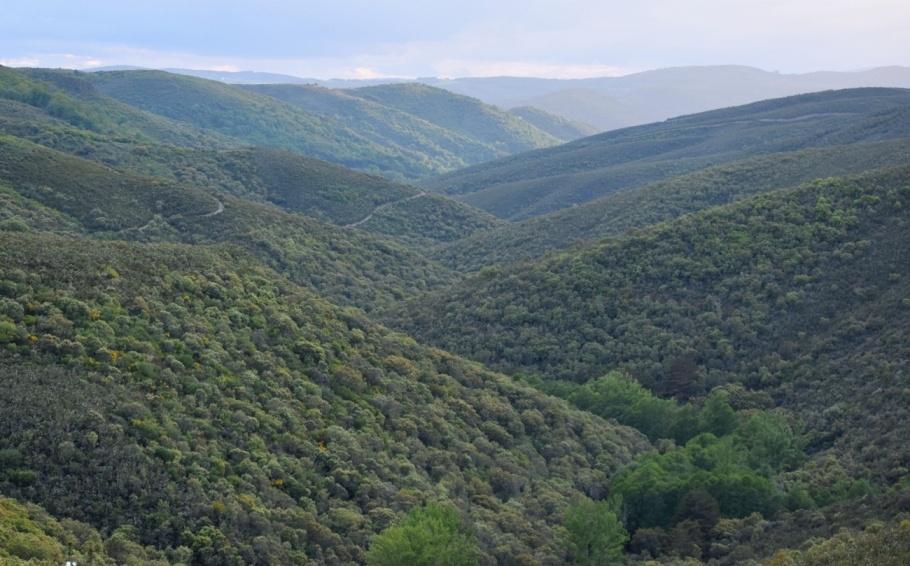 Sierra de la Culebra Berrea