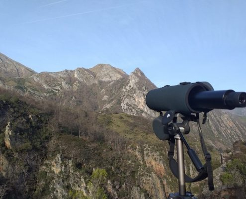 ver-osos-en-asturias
