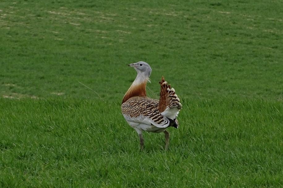 villafafila-aves