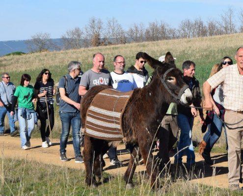 Paseos en burro por la provincia de Zamora