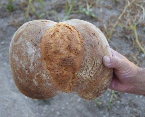 curso para hacer pan