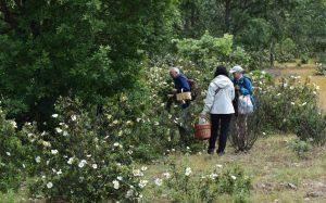 excursiones rutas micologicas primavera
