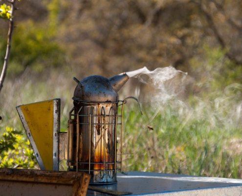 apicultor por un dia