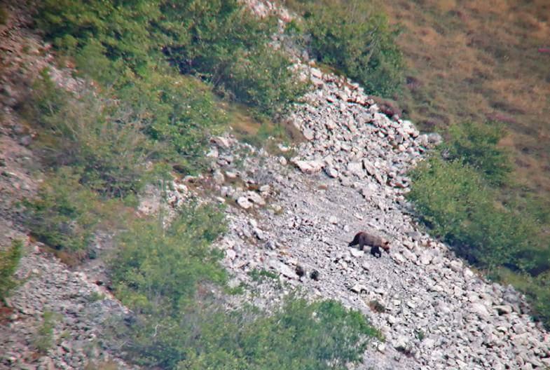 osos-en-palencia