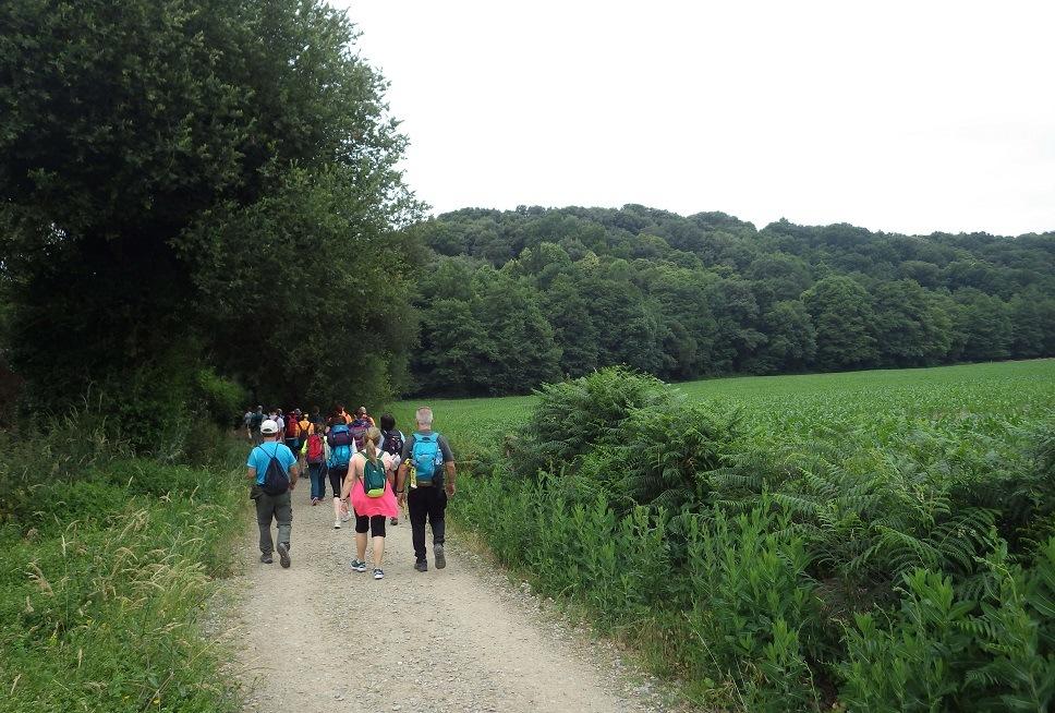 Formamos grupos para hacer el Camino de Santiago | Naturaliste