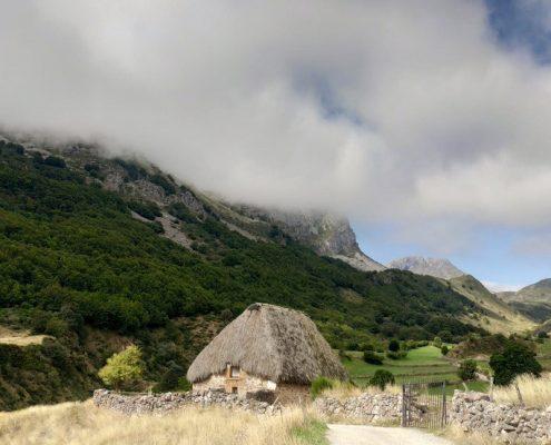 berrea asturias