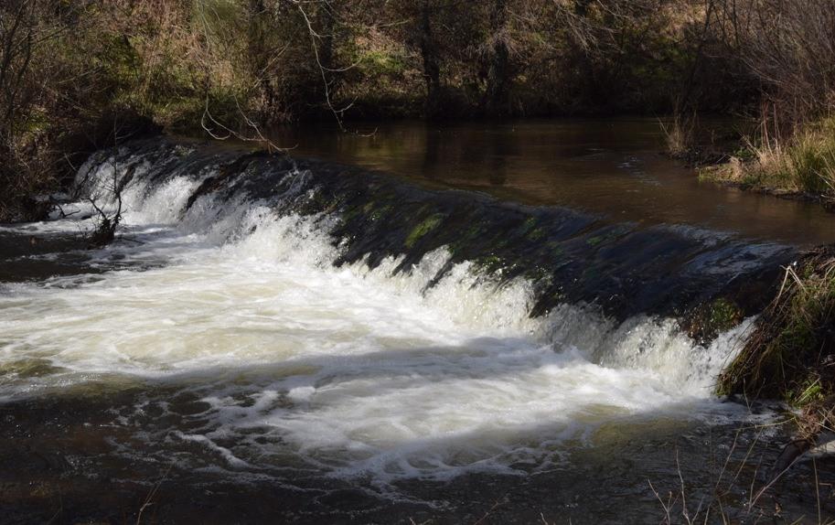 rio cabron