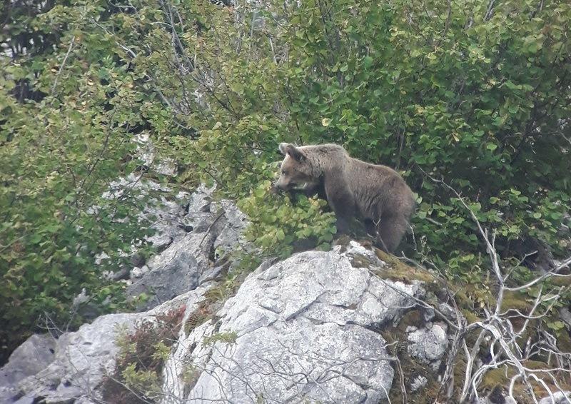ver-osos-españa