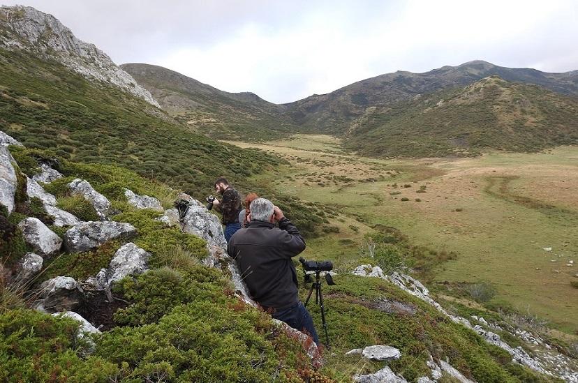 ver osos picos de europa