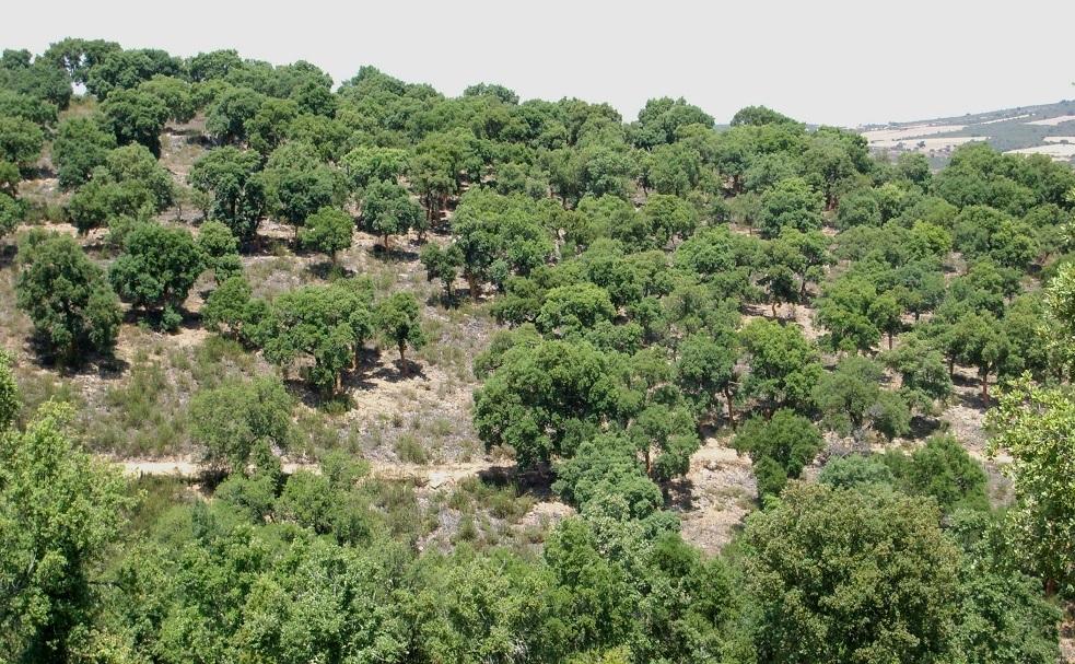 bosque singular zamora