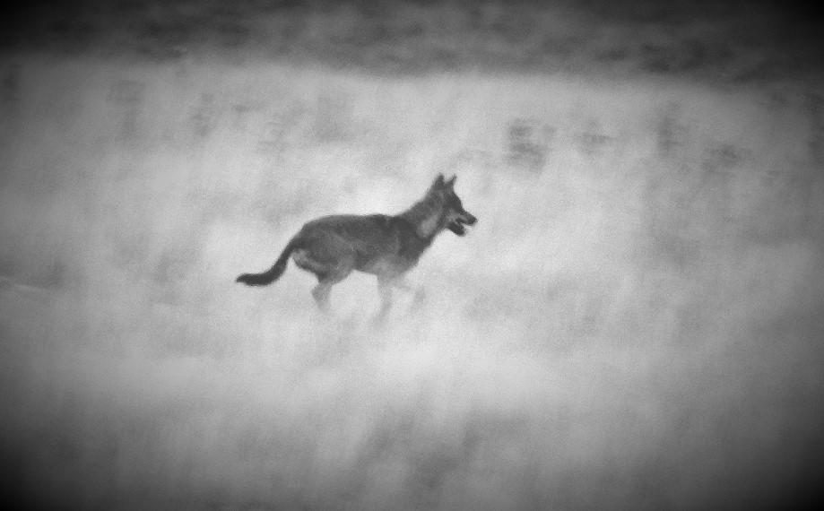 observacion-fauna-palencia