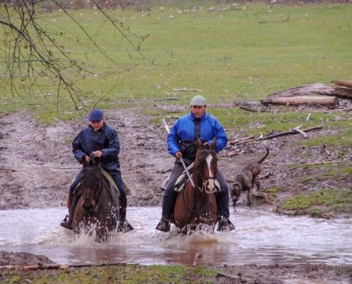 visita-dehesa-caballos