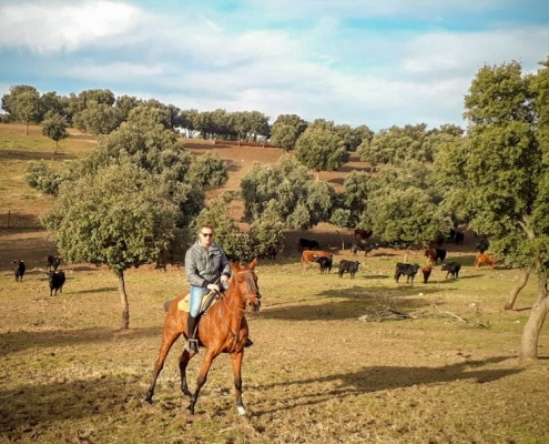 visita-ganaderia-caballos
